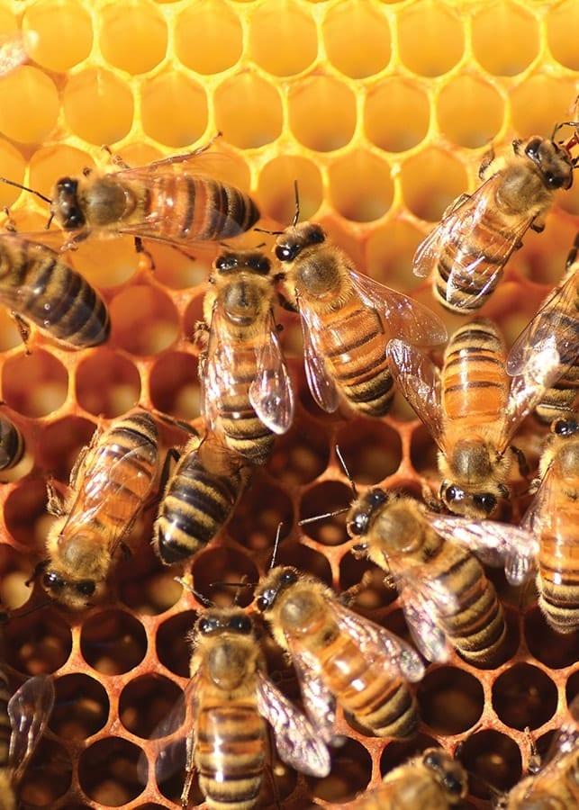 Forest Honey 1