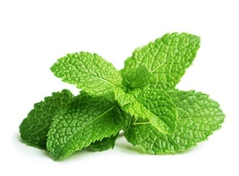 4 Reasons to consume mint regularly Blog